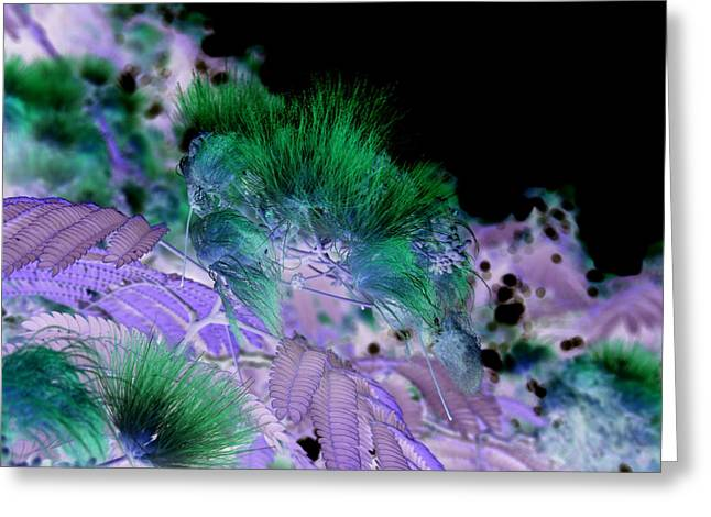 Floral Digital Art Greeting Cards - Dark Mimosa II Greeting Card by James Granberry