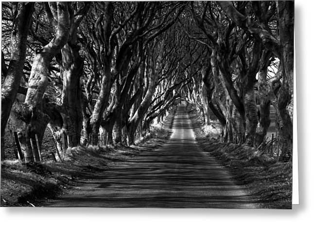 Ballymoney Greeting Cards - Dark paths Greeting Card by David McFarland