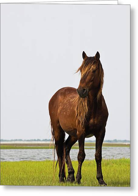 Rachel Carson Greeting Cards - Dark Stallion Greeting Card by Bob Decker