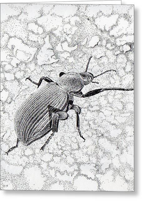 Darkling Bug Greeting Card by Inger Hutton