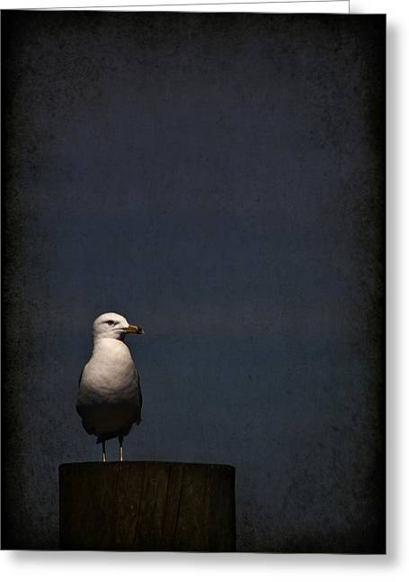 Gull Greeting Cards - Darkness Falls Greeting Card by Evelina Kremsdorf