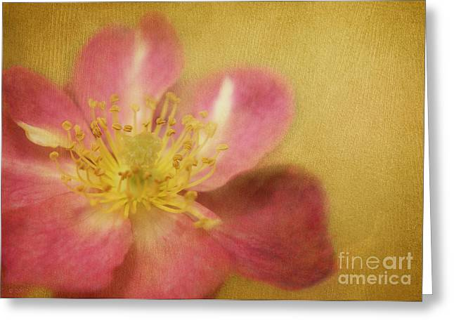 Danity Greeting Cards - Darlin Greeting Card by Reflective Moments  Photography and Digital Art Images