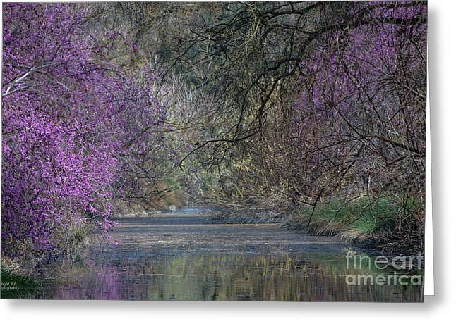 Davis Arboretum Creek Greeting Card by Agrofilms Photography