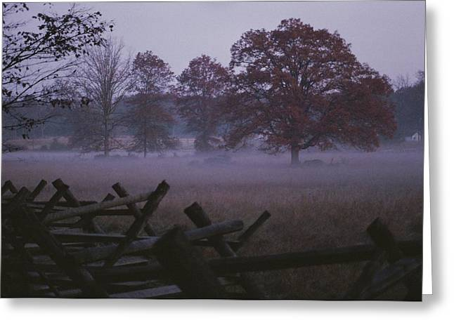 Park Scene Greeting Cards - Dawn Mist Hangs Over A Field Bordered Greeting Card by Stephen St. John