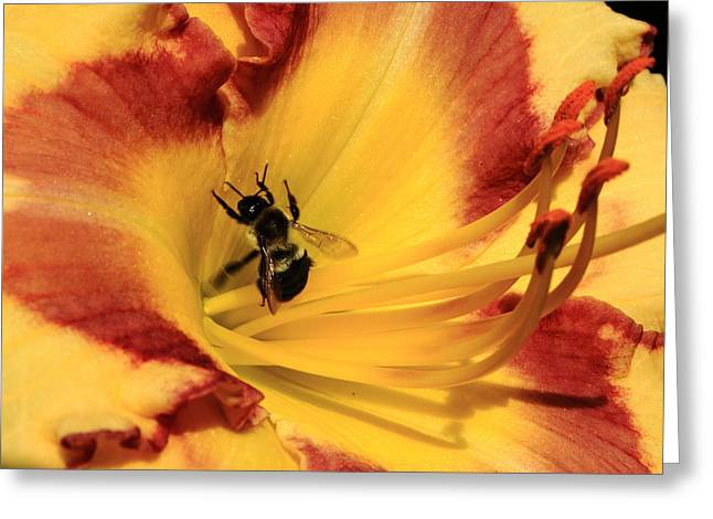 Day Lilly Greeting Cards - Day Lilly III Greeting Card by Gene Berkenbile