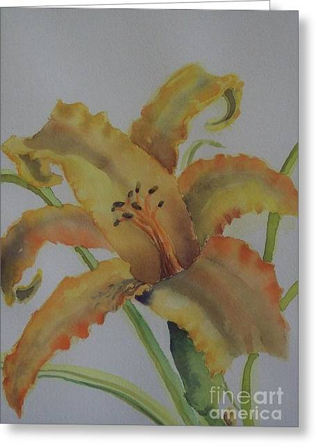 Day Lilly Paintings Greeting Cards - Day lilly Greeting Card by W R  Hersom