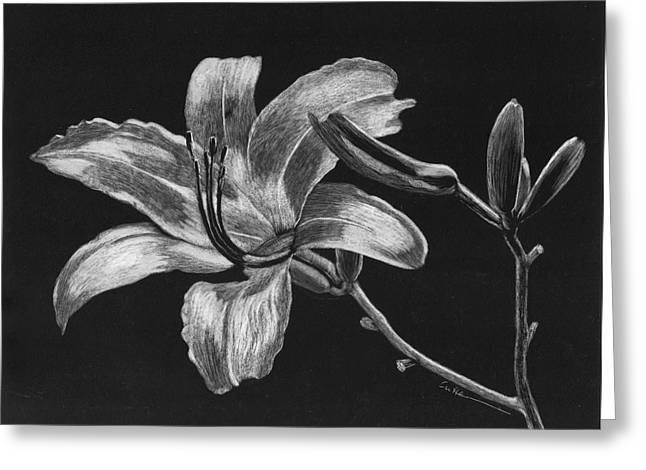 Diane Cutter Greeting Cards - Day Lily Greeting Card by Diane Cutter
