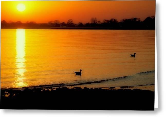 Day Settling Greeting Card by Karol Livote