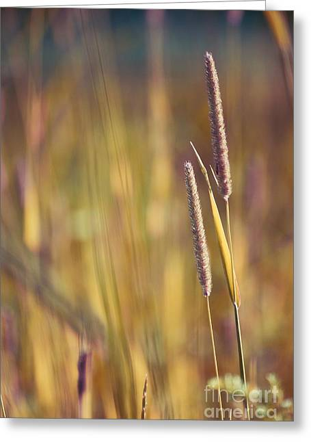 """nature Photography Prints"" Greeting Cards - Day Whisperings Greeting Card by Aimelle"