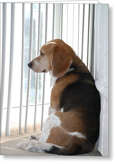 Beagle Greeting Cards - Daydreaming Greeting Card by Jennifer Lyon