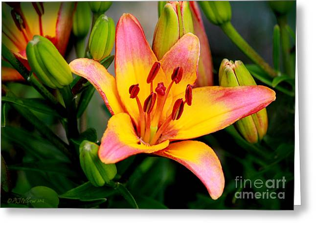 Blooms Greeting Cards - Daylily Bloom Greeting Card by Patricia L Davidson
