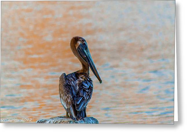 Days End Pelican Greeting Card by Shannon Harrington