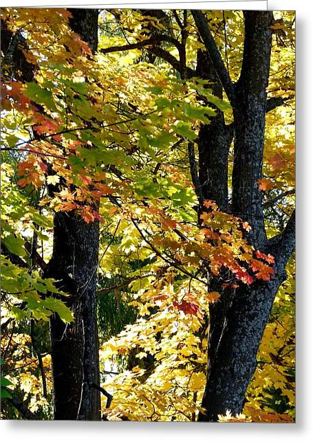 Dazzled Greeting Cards - Dazzling Days Of Autumn Greeting Card by Will Borden