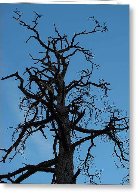 David Yunker Greeting Cards - Dead Canyon Tree Greeting Card by David Yunker