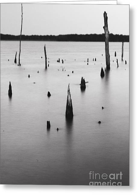 Manasquan Reservoir Greeting Cards - Dead Forest Greeting Card by Ekaterina LaBranche