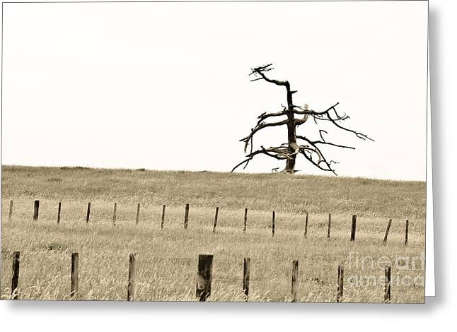 Sardinelly Greeting Cards - Dead Tree Dancing Greeting Card by Yurix Sardinelly