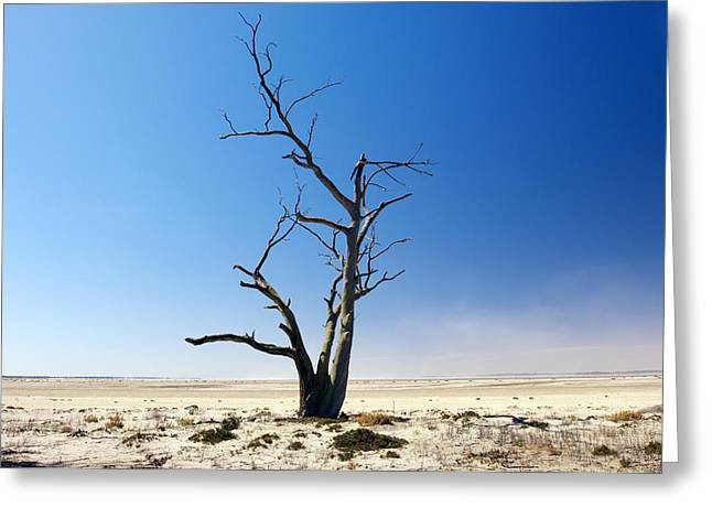 Desertification Greeting Cards - Dead Tree Greeting Card by Jeremy Walker