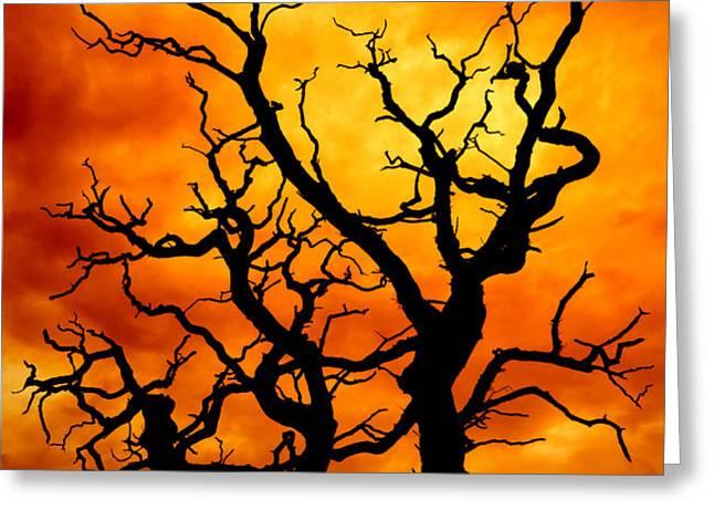 dead tree Greeting Card by Meirion Matthias