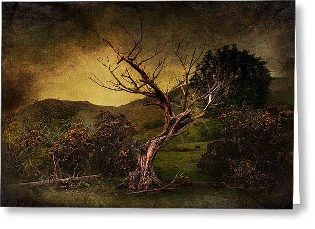 Bare Trees Mixed Media Greeting Cards - Dead Tree Greeting Card by Svetlana Sewell