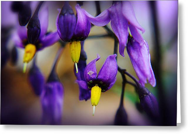 Purple Greeting Cards - Deadly Nightshade 1 Greeting Card by Scott Hovind