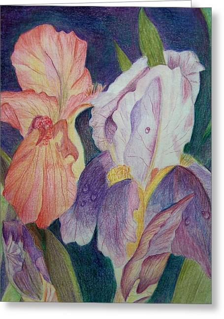 Violet Drawings Greeting Cards - Dear Iris Greeting Card by Vijay Sharon Govender