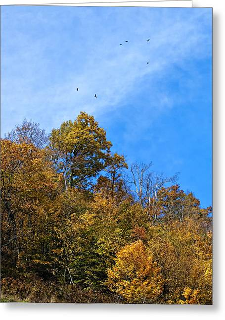 Monongahela National Forest Greeting Cards - Death in the Afternoon Greeting Card by Steve Harrington