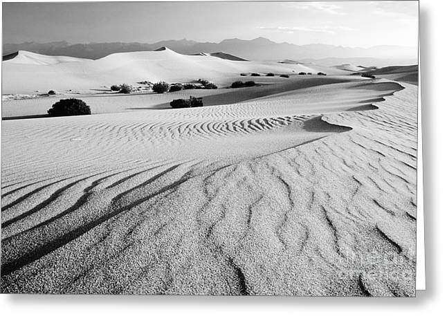 Sand Patterns Greeting Cards - Death Valley Dunes 11 Greeting Card by Bob Christopher