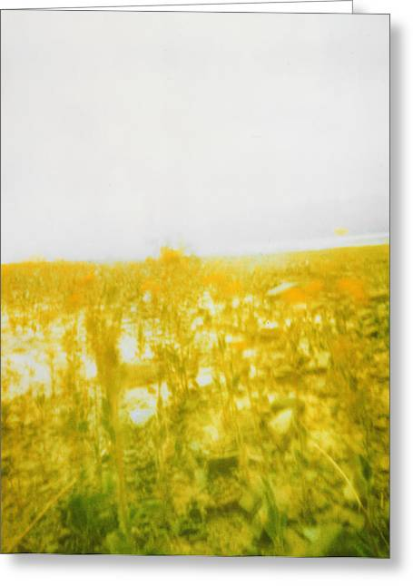 Cooperation Greeting Cards - Death Valley flowers Greeting Card by Patrick House