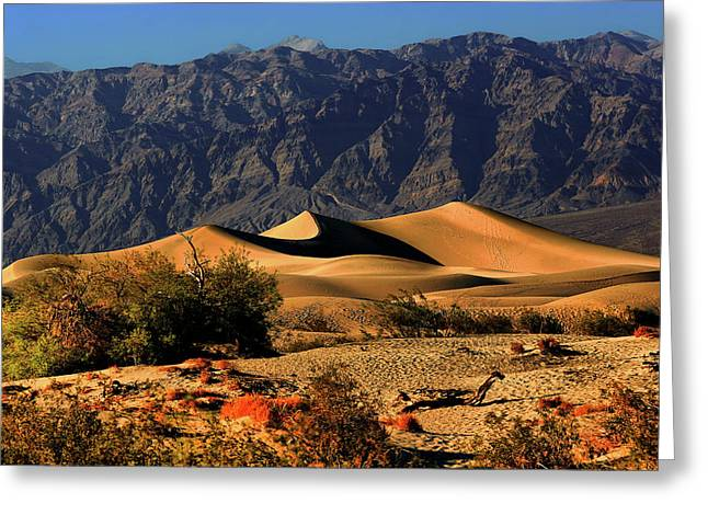 Preserved Greeting Cards - Death Valleys Mesquite Flat Sand Dunes Greeting Card by Christine Till