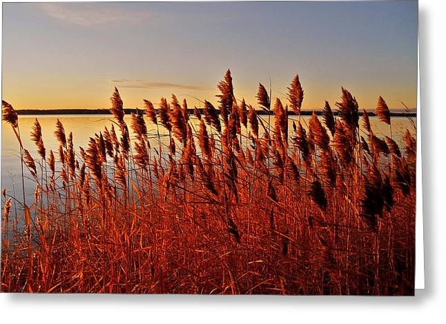 Farbenfroh Greeting Cards - December Sunrise ... Greeting Card by Juergen Weiss