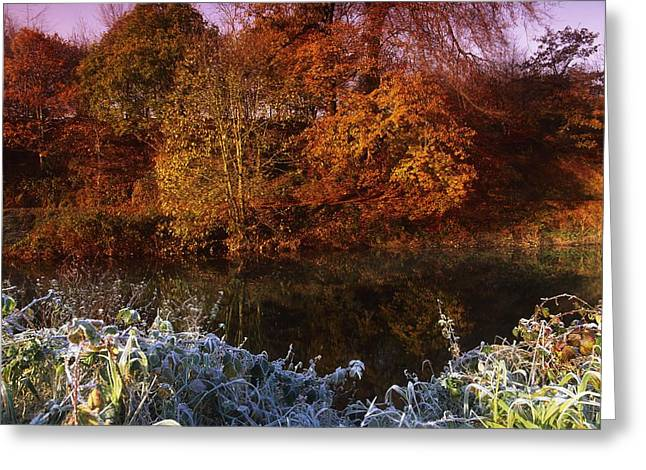 Reflections In River Greeting Cards - Deciduous Woods, In Autumn With Frost Greeting Card by The Irish Image Collection