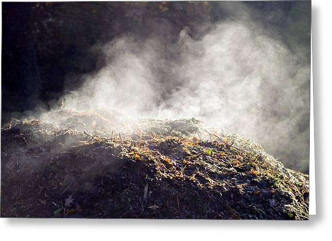 Decomposition Greeting Cards - Decomposition Greeting Card by Paul Rapson