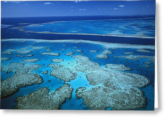 Ai Greeting Cards - Deep Channel Separating Hardy Reef Greeting Card by Jean-Paul Ferrero