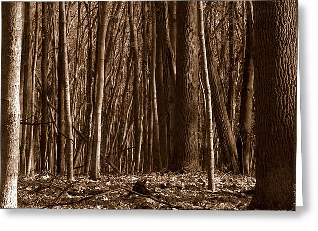 Shades State Park Greeting Cards - Deep Dark Dense Greeting Card by Ed Smith