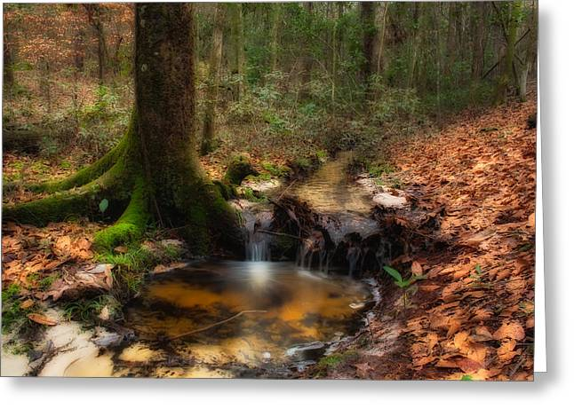 Deep Forest Creek Greeting Card by Rich Leighton