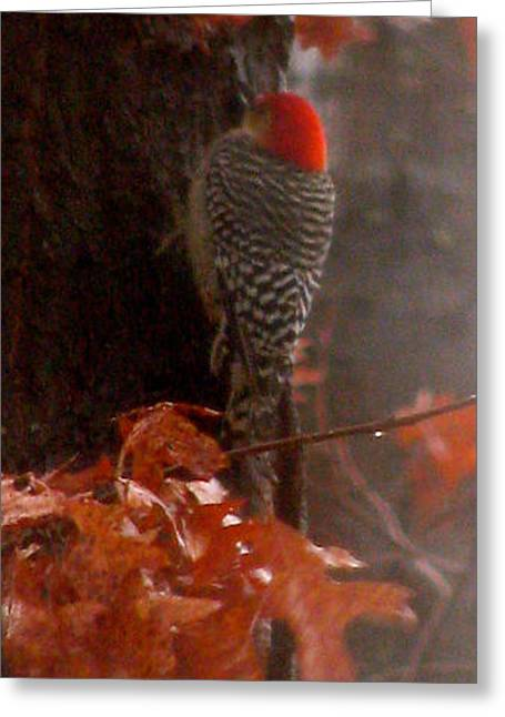 Flying In A Storm Greeting Cards - Deep In The Forest Woodpecker Greeting Card by Debra     Vatalaro