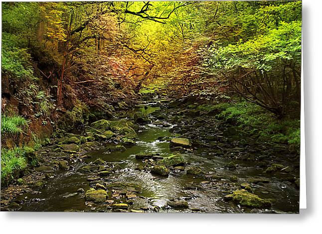 Recently Sold -  - Photo Art Gallery Greeting Cards - Deep in the Woods Greeting Card by Svetlana Sewell