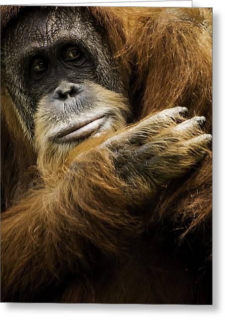 Deep In Thought Greeting Cards - Deep in Thought Greeting Card by Keith Allen