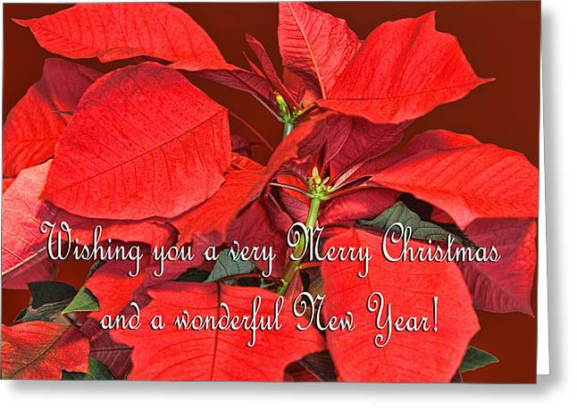 Green Burgandy Greeting Cards - Deep Red Poinsettia Christmas Card Greeting Card by Linda Phelps