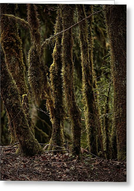 Forest Floor Greeting Cards - Deep Woods Greeting Card by Bonnie Bruno