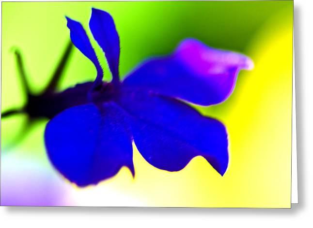 Deeply Blue Greeting Card by Marie Jamieson
