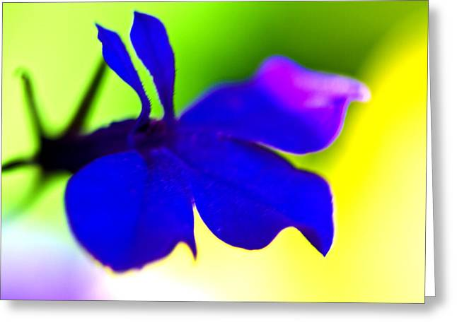 Deeply Blue Greeting Card by Marie Jamieson