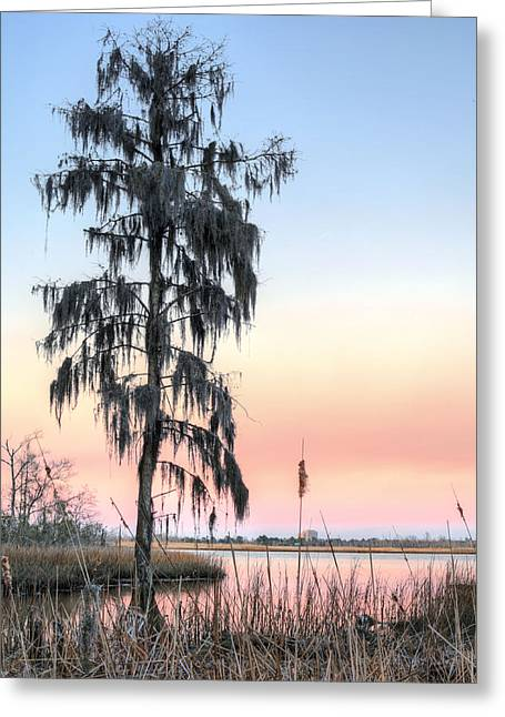 Cape Lily Greeting Cards - Deeply Southern Greeting Card by JC Findley