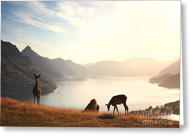 Wildlife Sunset Greeting Cards - Deer at sunset Greeting Card by Pixel  Chimp