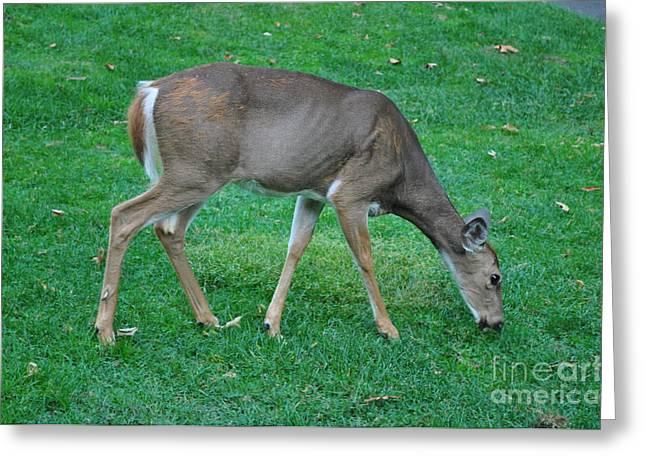 Lenora Berch Greeting Cards - Deer Golf course Greeting Card by Lenora Berch