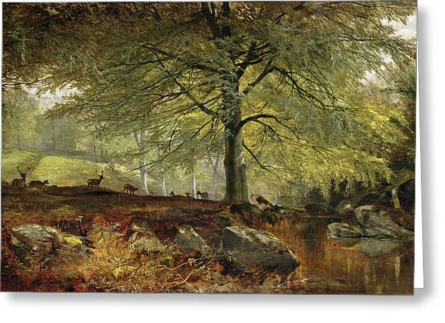 Peaceful Water Greeting Cards - Deer in a Wood Greeting Card by Joseph Adam