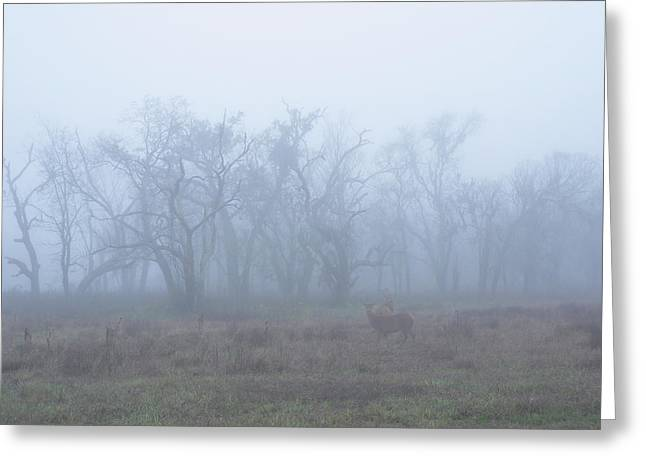 Wilderness Pyrography Greeting Cards - Deer In The Mist Greeting Card by Eric Monse