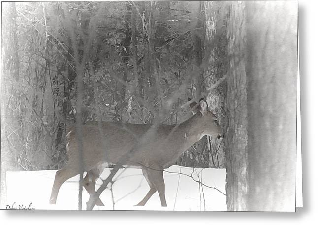 Treatment Mixed Media Greeting Cards - Deer In The Winter Forest Greeting Card by Debra     Vatalaro