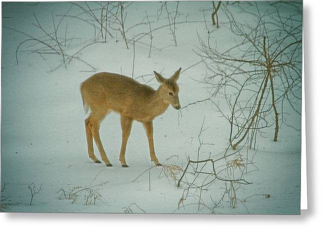 Deer Winter Greeting Card by Karol Livote