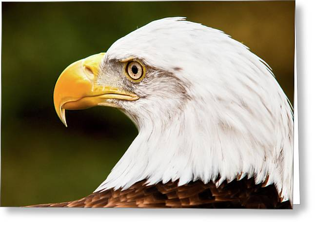 Eagle Greeting Cards - Defiance Greeting Card by Ron  McGinnis